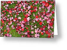 Leafs On Grass Greeting Card