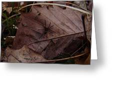 Leafs With Spider 01 Greeting Card
