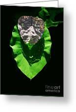 Leaf.three Layers Greeting Card