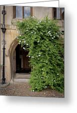 Leafy Archway  Greeting Card
