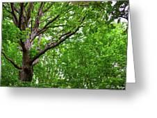 Leafy Canopy Greeting Card