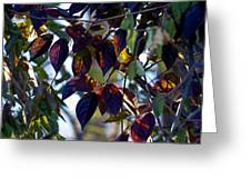 Leafy Light Show Greeting Card