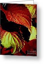 Leafy Melange Greeting Card
