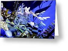 Leafy Sea Dragon Greeting Card by Kelly Mills