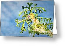Leafy Sea Dragon Greeting Card by Tanya L Haynes - Printscapes