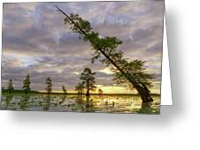 Leaning Cypress Greeting Card