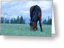 Leaning Horse Greeting Card
