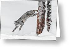 Leapin Bobcat Greeting Card
