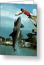 Leaping Dolphins At Hawks Cay Greeting Card