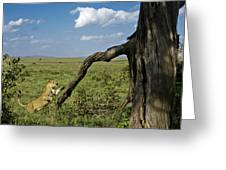 Leaping Lion Greeting Card
