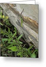 Leaping Lizard Greeting Card