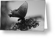 Learn To Fly 001 Greeting Card