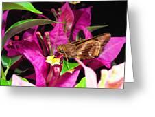 Least Skipper Butterfly Greeting Card