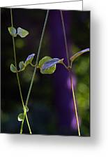 Leaves-0043 Greeting Card