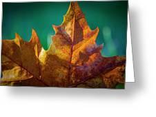 Leaves 971 Greeting Card