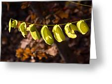 Leaves All In A Row Greeting Card