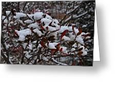 Leaves And Powery Snow Greeting Card