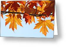 Leaves Autumn Orange Sunlit Fall Leaves Blue Sky Baslee Troutman Greeting Card