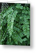 Leaves Cascading Greeting Card