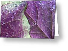 Leaves, Color,  And Dew Greeting Card