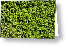Privacy Hedge Greeting Card