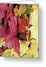 Leaves Fall Greeting Card
