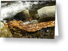 Leaves Flowing-2 Greeting Card