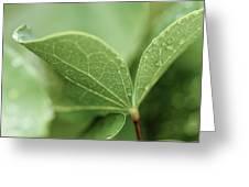 Leaves, Fresh Greeting Card