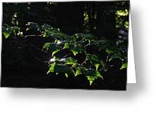 Leaves In Filtered Light  Greeting Card
