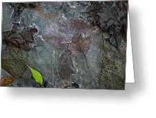 Leaves In Ice At Upper Creek Falls Greeting Card