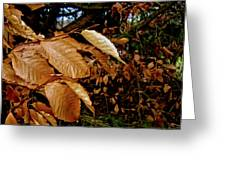 Leaves In Late Autumn Greeting Card