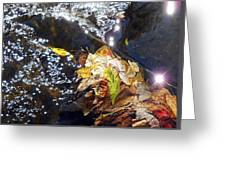 Leaves In River Greeting Card