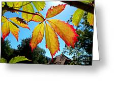 Leaves In Sunlight 4 Greeting Card
