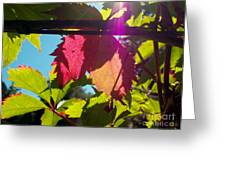 Leaves In Sunlight 6 Greeting Card