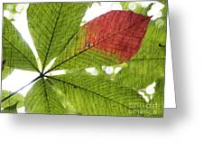 Leaves. Greeting Card