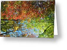 Leaves Of All Colors Greeting Card