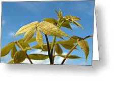 Leaves Of Gold Greeting Card