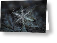 Leaves Of Ice Greeting Card
