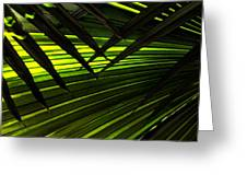 Leaves Of Palm Color Greeting Card