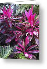 Leaves Of Pink Greeting Card