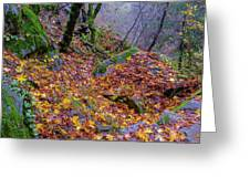 Leaves Of The Forest Greeting Card