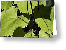 Leaves Of Wine Grape Greeting Card by Michal Boubin
