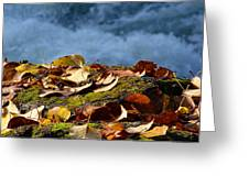 Leaves On Rock By River Greeting Card