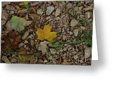 Leaves On The Rocks Greeting Card