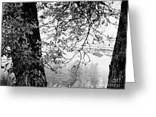 Leaves Over The River Greeting Card