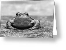 Leaving Home - Black And White Greeting Card