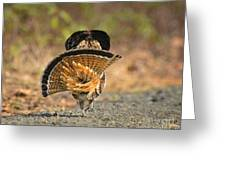 Leaving The Scene Grouse Greeting Card