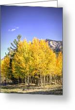 Lee Canyon Aspen Greeting Card