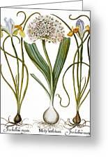 Leek And Irises, 1613 Greeting Card