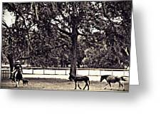 Lee's Ranch 2 Sepia Greeting Card